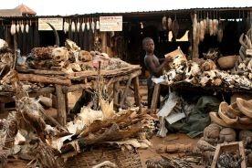 Targowisko fetyszy voodoo w Togo